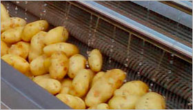 Potato Washing Machine